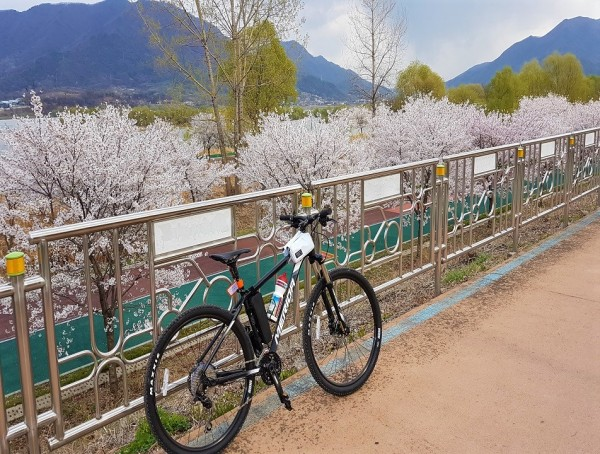 South Korea Cherry Blossom Ride
