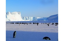 Adventure to Antartica – Highlights of the Frozen Continent
