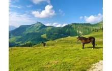 Alpine Pasture Hike in the Salzkammergut