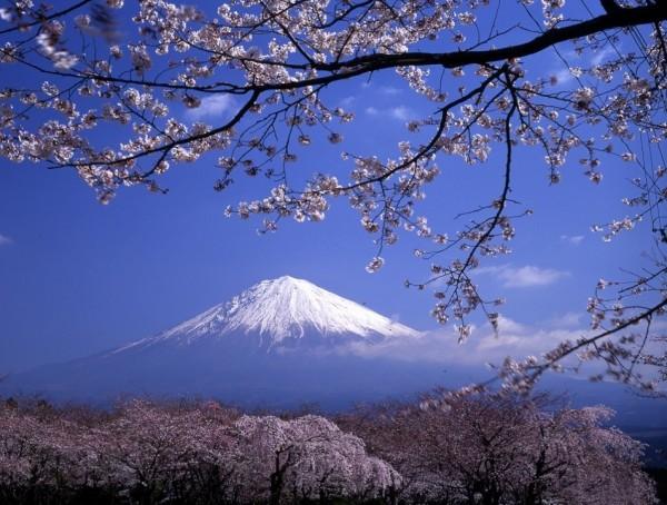 Essence of Fuji