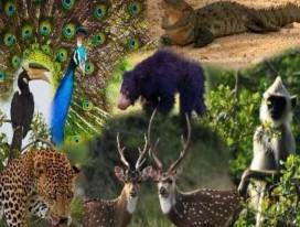 Sri Lanka Wildlife, Nature & Beach