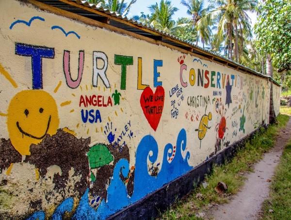 Bali Turtle Conservation & Rehabilitation Centre