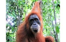 Trekking in Sumatra