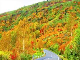 Autumn Colours Hike